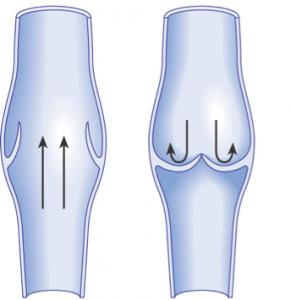 正常な静脈弁